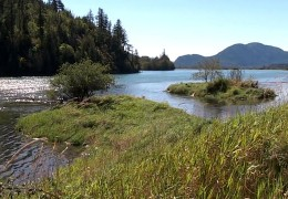 Harrison Salmon Stronghold Slough Restoration 2014